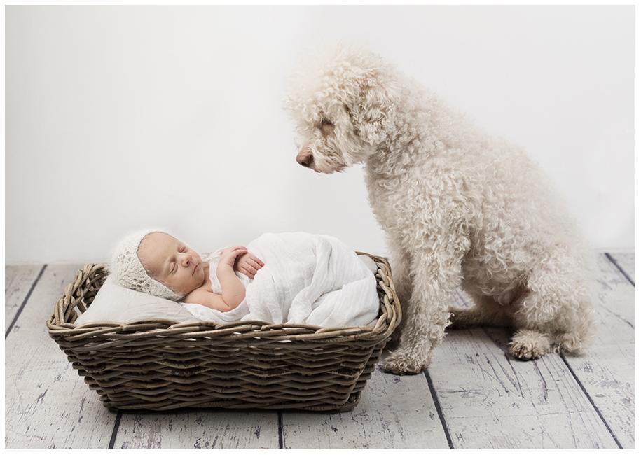 Nyfödd och hund - Magpodden